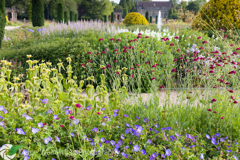Geraniums, phlomis and knautia provide July colour in one of the beds in the Italian Garden at Trentham Gardens, Staffordshire This image is available for sale for editorial purposes, please contact me for more information.
