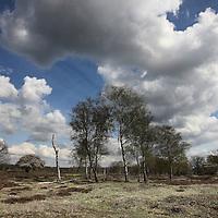 Nederland, Baarn , 13 april 2011..Baarnse boswandeling in de Vuursche met NOS presentatrice Sacha de Boer en natuurfotograaf Ruben Smit..Op de foto de heide  de stulp genaamd...Foto:Jean-Pierre Jans