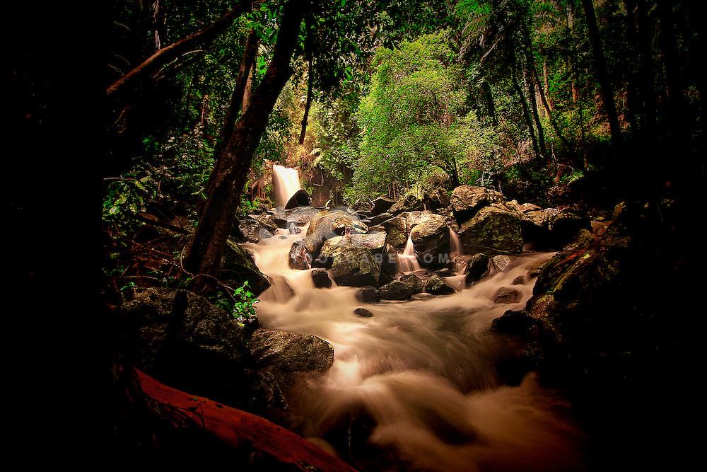 Curtis Falls Mt Tamborine