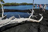 Ecotourism, Fernandina island, Punta espinosa, Galapagos, Ecuador.