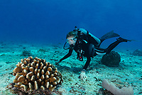 Sylvia Dive Watch rolex