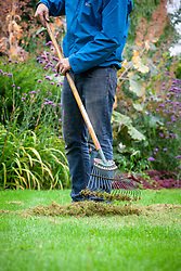 Lawncare - raking moss and thatch out of a lawn using a tine rake