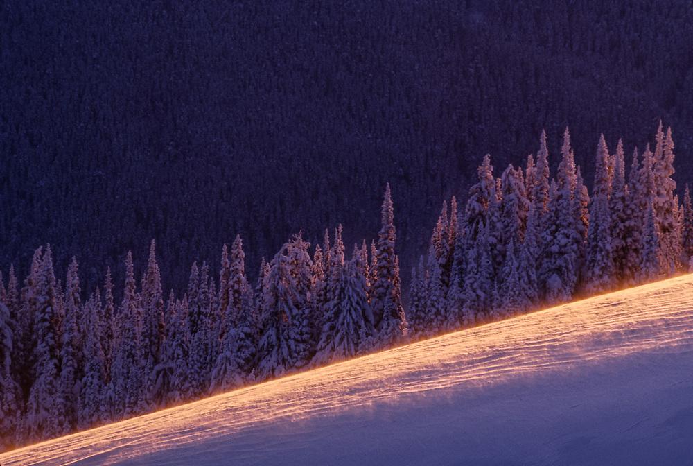Windblown ice, evening light, Hurricane Ridge Olympic National Park, Washington, USA