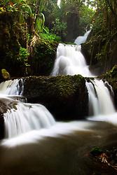 Onomea Falls, Hawaii Tropical Botanical Garden, Hilo, Big Island, Hawaii