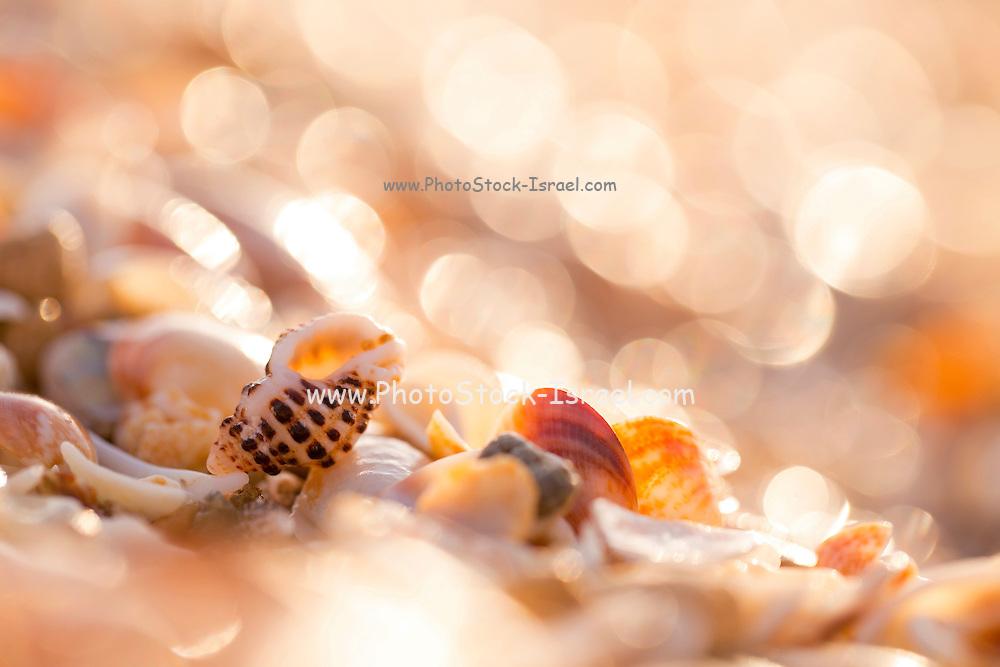Seashells on the Mediterranean sea shore