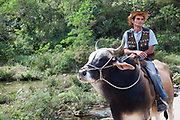 Main cowboy gaucho riding a bull, Cienfuegos province, Cuba.
