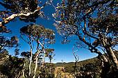 Sri Lanka - Horton Plains National Park