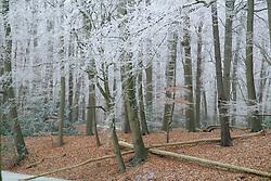 Gooilust Winter, koud, cold