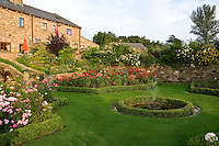 beds of roses in a country garden