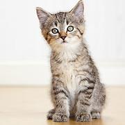 20160605 Kittens-Martha