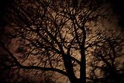 árbol a medianoche