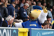 Haydon the Womble celebrates AFC Wimbledon attacker Marcus Forss (15) scoring goal during the EFL Sky Bet League 1 match between AFC Wimbledon and Rochdale at the Cherry Red Records Stadium, Kingston, England on 5 October 2019.