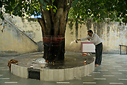 A man makes an offering to the gods at a tree shrine in a Hindu temple Janakpuri, New Delhi, India