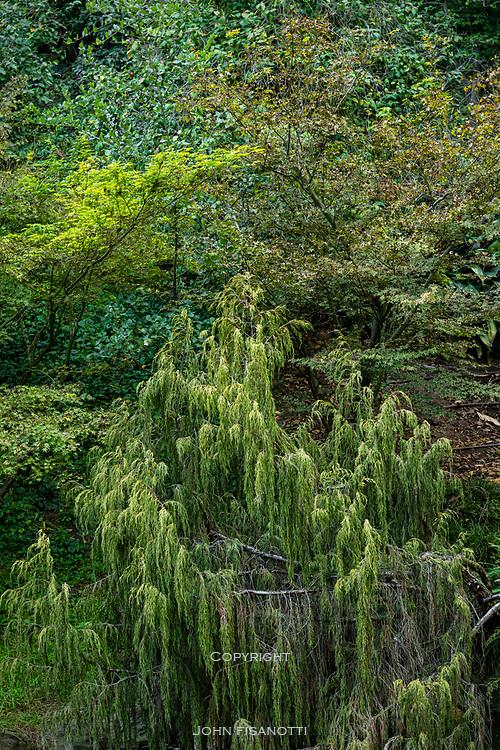 Huntington Gardens, San Marino, California