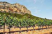 Domaine de l'Hortus. The Montagne Massif de l'Hortus mountain cliff. Pic St Loup. Languedoc. Mourvedre vines facing south. France. Europe. Vineyard.