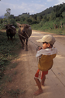 boy pulling water buffalo in Northern Laos.