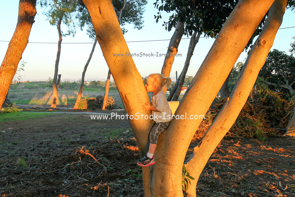 Outdoor activity. young girl climbs a tree