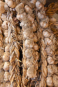 Garlic plaits, Allium sativum, on sale in food market in Pienza, Tuscany, Italy