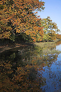 Trees with autumnal leaves reflect from water, River Deben, Kyson Point, near Woodbridge, Suffolk, England
