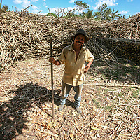 Lucio Chávez works cutting firewood extracted from the Las Lajas coffee farms during the pruning of the bushes. UCRAPROBEX a certified Fairtrade producer based in El Salvador.