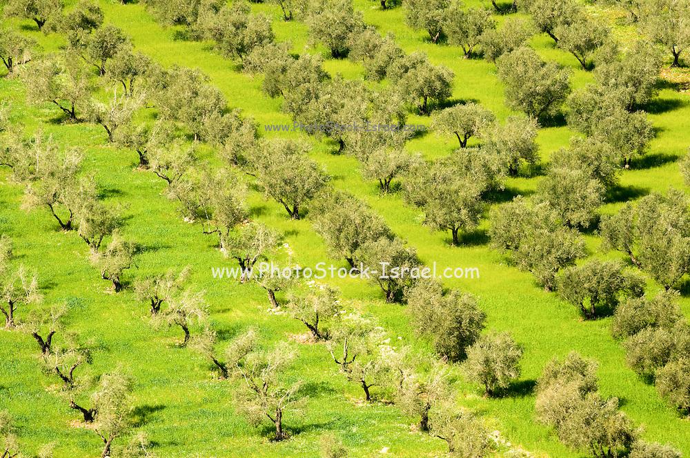 Israel, West Bank, Samaria, Dotan Valley, Agricultural fields