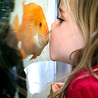 Avery Gray, 4, connects with a kiss through the fish tank glass at Simcha Preschool with a South American Cichlid that has been swimming in the tank at the Aptos, California school for the past 7 years. While still nameless, the fish has become a bit of a mascot at Simcha, which has been offering educationally enriching care for children 2-5 years old for the past 35 years. Simcha is the Hebrew word for joy.<br /> Photo by Shmuel Thaler <br /> shmuel_thaler@yahoo.com www.shmuelthaler.com