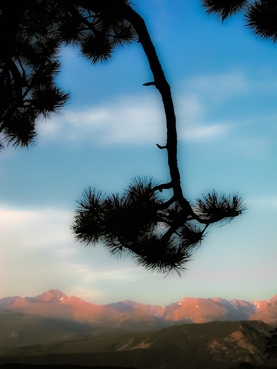 Morning light, pine branch, Rocky Mountain National Park, Colorado, USA