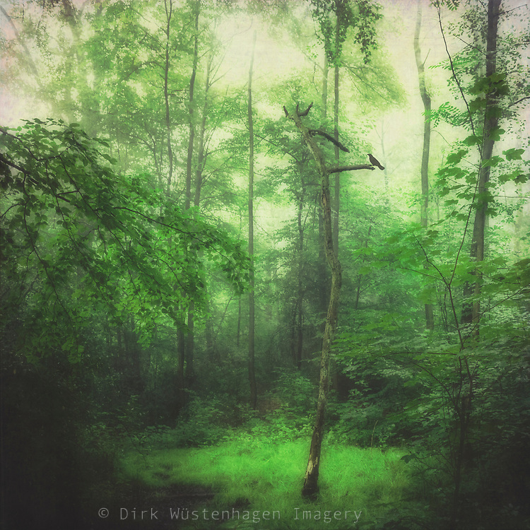 Dead tree in a green corner of a forest - textured photography