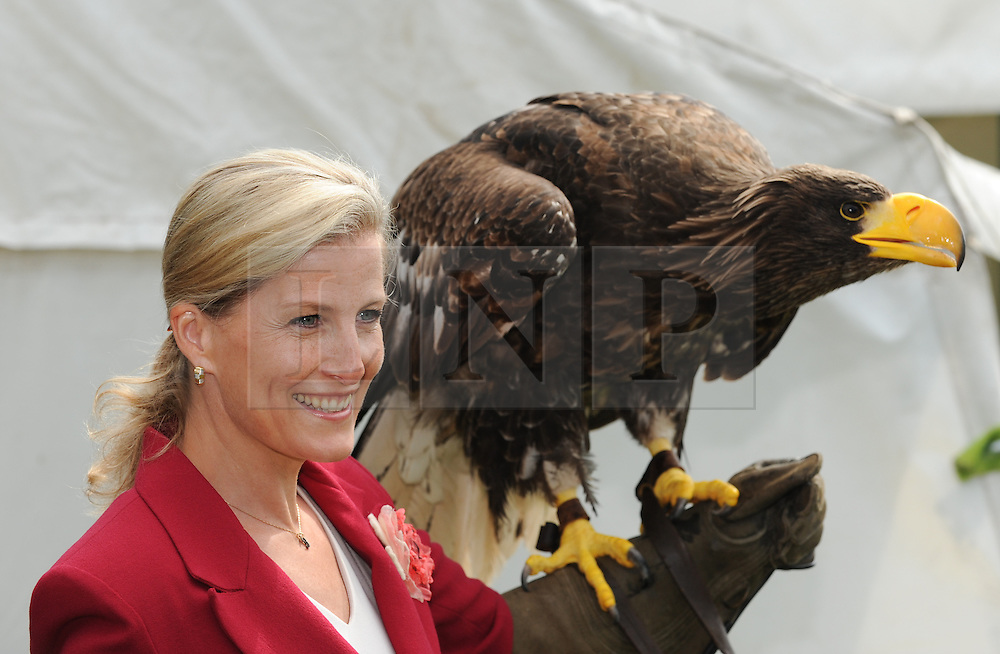 © Licensed to London News Pictures. <br /> 08/07/2014. <br /> <br /> Harrogate, United Kingdom<br /> <br /> Today saw the first day of the Great Yorkshire Show and HRH The Countess of Wessex paid a visit to the show and visited a number of stands including the Bird of Prey stand where she held a Sea Eagle called Stella. <br /> The show is England's Premier Agricultural Event and is based on the 250-acre Great Yorkshire Showground near Harrogate. The Main Ring is the hub of the Show providing a setting for international show jumping and world class cattle parade. The showground is filled with animals, country demonstrations, have-a-go activities and rural crafts.<br /> <br /> Photo credit : Ian Forsyth/LNP