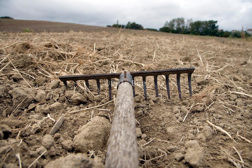 hand rake at a large raked field