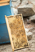 Close up of honeycomb with bees beside hive, Ikaria, Greece