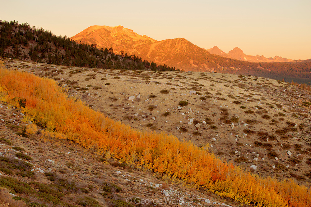 Mammoth Mountain and Aspen along Creek, Inyo National Forest, Mono County, Caifornia