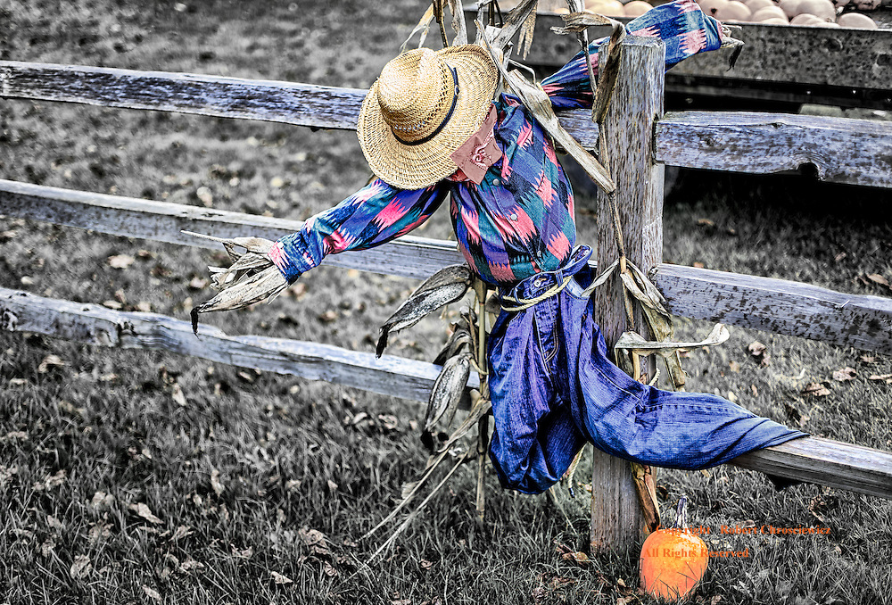 Hanging Around: A straw filled scarecrow is draped on a wooden fence for Halloween, Agassiz British Columbia, Canada.