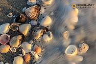Surf on seashells on Sanibel Island in Florida, USA