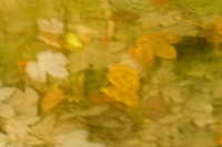 Underwater dead leaves in autumn, Plitvice National Park, Croatia