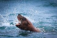 Glacier Bay Wildlife