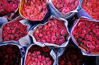 Thailand - Bangkok - Flower Market // Thailande - Bangkok - Marché aux fleurs