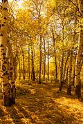Autumn Leaves & Shadows