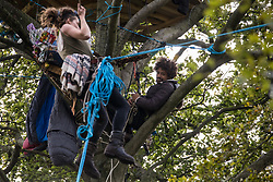An anti-HS2 activist watches a tree protector climbing towards a tree house about sixty feet above ground at a wildlife protection camp in ancient woodland at Jones' Hill Wood on 5 October 2020 in Aylesbury Vale, United Kingdom. The Jones' Hill Wood camp, one of several protest camps set up by anti-HS2 activists along the route of the £106bn HS2 high-speed rail link in order to resist the controversial infrastructure project, is currently being evicted by National Eviction Team bailiffs working on behalf of HS2 Ltd.