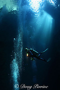 divers descend into the slot at The Keyhole, one of Hawaii's best dive sites, Lehua Rock ( near Niihau Island, off Kauai ), Hawaii, USA ( Central Pacific Ocean )
