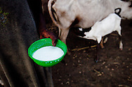 A woman holds a bowl of milk which is supposed to feed 3 of her children for the week. The Boma hospital is the only in the region.