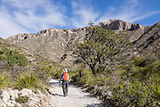 McKittrick Canyon Trail hiker. Hike some of the most scenic trails in Texas in Guadalupe Mountains National Park, in the Chihuahuan Desert, near El Paso, USA. The park contains Guadalupe Peak, the highest point in Texas (8749 feet/2667 m). The Guadalupe Mountains are the uplifted part of the ancient Capitan Reef which thrived along the edge of an inland sea more than 250 million years ago during Permian time. Capitan Reef is one of the best-preserved exposed Permian-age fossil reefs in the world. The park also features the landmark peak of El Capitan, along the historic Butterfield Overland Mail stagecoach line (1857-1861), which carried passengers and US Mail in just 22 days to San Francisco starting from Memphis, Tennessee or St. Louis, Missouri, twice a week. Hiking the ecologically-diverse McKittrick Canyon in Guadalupe Mountains NP is best when fall foliage turns color.