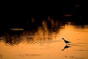 Aquidauana_MS, Brasil...Silhueta de um passaro em um rio na fazenda Rio Negro no Pantanal...A bird silhouette in a river in Rio Negro farm in Pantanal...Foto: JOAO MARCOS ROSA / NITRO