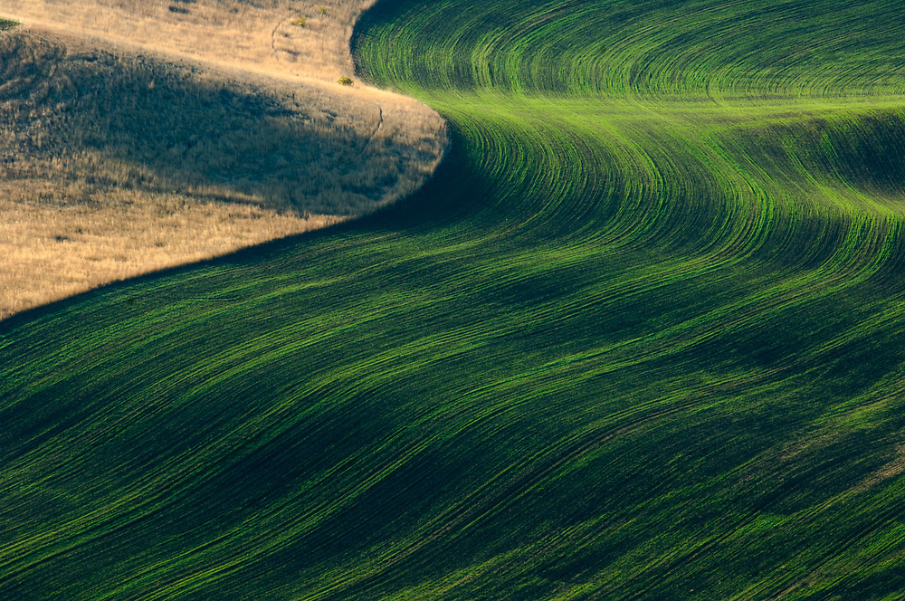 Palouse Hills wheat fields view from Steptoe Butte State Park, morning light, October, Whitman County, Washington, USA