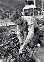 Elderly man gardening, UK 1991