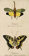 Hand painted print of insects from 'Lectures on Entomology' by John Barlow Burton Published in London in 1837 by Simpkin and Marshall