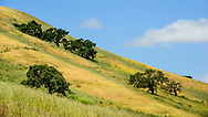 Late spring colourful yellow and green landscape of Sonoma County
