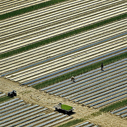Migrant Workers working farm in south New Jersey Aerial views of artistic patterns in the earth.