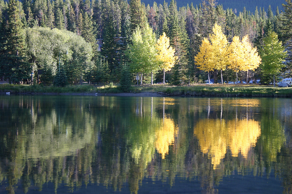 Golden autumn trees reflected in the Bow River Banff Alberta