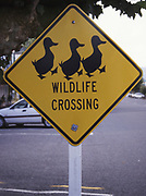 Getting your ducks in a row - in Picton, Marlborough Sounds. A street sign in by the main road in Picton in 2004, long gone ever since. 3 Ducks on yellow ground.